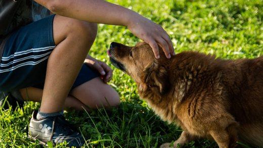 про собаку и человека