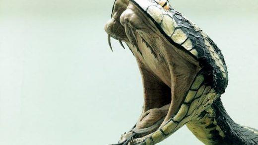 Умрёт ли змея, если укусит сама себя