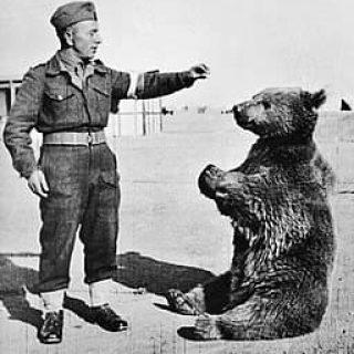 польский медведь солдат Войтек фото